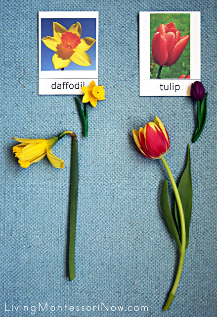 Flower Identification and Matching Activity
