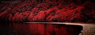 Patagonia - red autumn