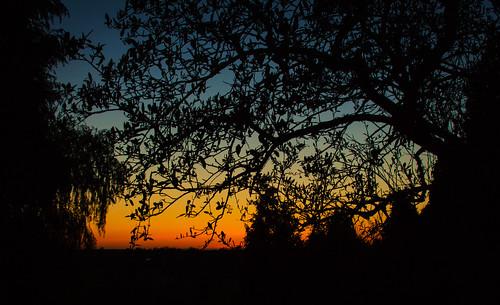 park trees sunset england sky orange sun nature canon evening glow leicestershire britain great canon650d