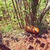 Wild loaf - Mystic River