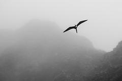 Isla Fernandina, Galapagos Islands, Ecuador.