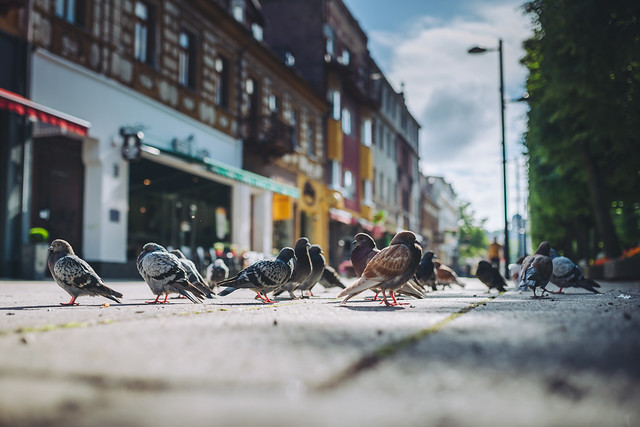 Birds | Kaunas | Summer 2016 #190/365 [Explored]