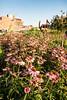 02 Tschappat photo flowers