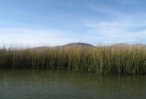 Lac Titicaca: des roseaux et des roseaux...