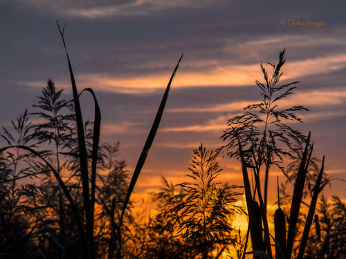 uk sunset sky plants colour nature weather clouds twilight grasses wildflower thegreatoutdoors merseyside burtonmerewetlands
