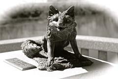 Fox on the Bridge - Egin IL