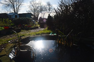 Winter sunshine at the allotment