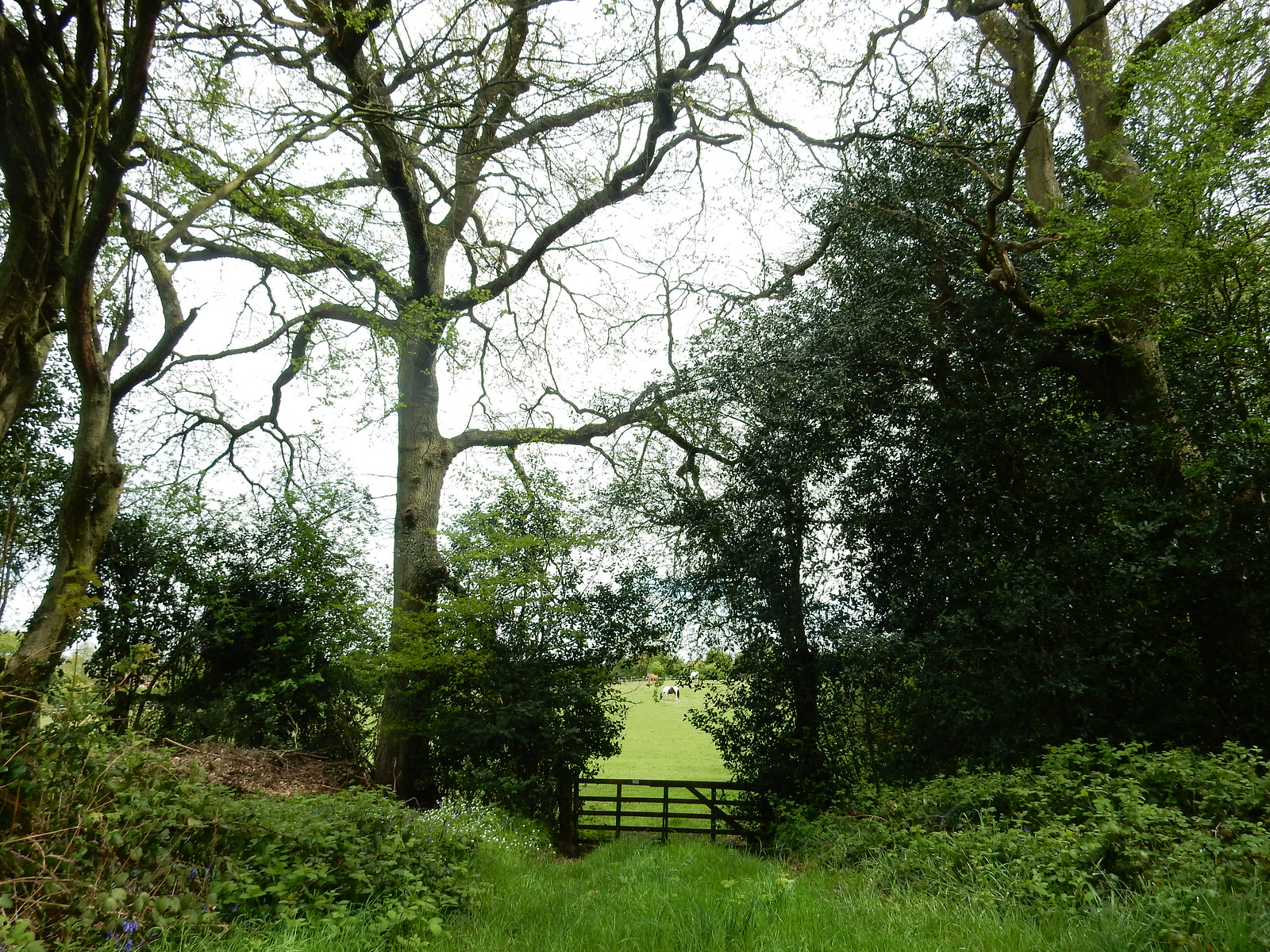 Gate Whyteleafe to Woldingham