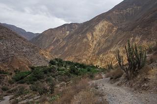Wanderung von Cabanaconde zur Oase Sangalle | Roland Krinner