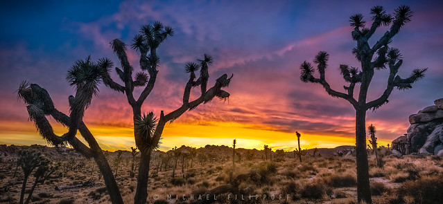 Joshua Tree Sunrise-1