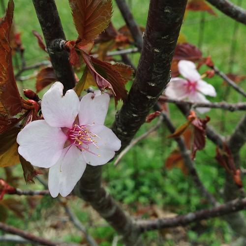 dawes arboritum