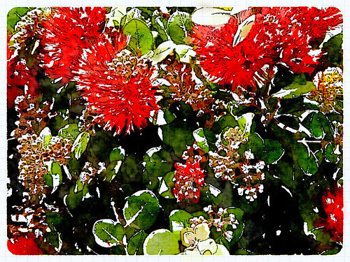Bottle Brush Plant Edited in Waterlogue Photo App Using the 'It's Technical' Style