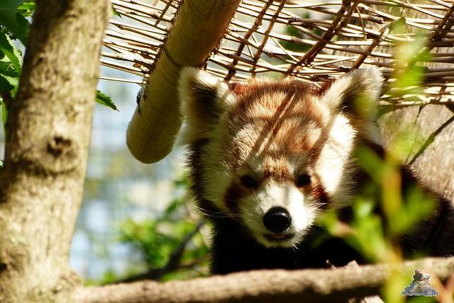 Tierpark Schönbrunn 16.04.2014 8