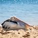 2010-08-SharkBay-68-0685