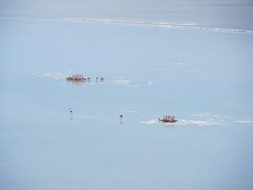 Le Sud Lipez: la Laguna Charcota gelée et ses flamants roses