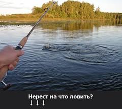 Нерест на что ловить?