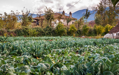 autumn house field turkey farm turkiye cabbage moutains turchia 2014 turkei aydın karacasu