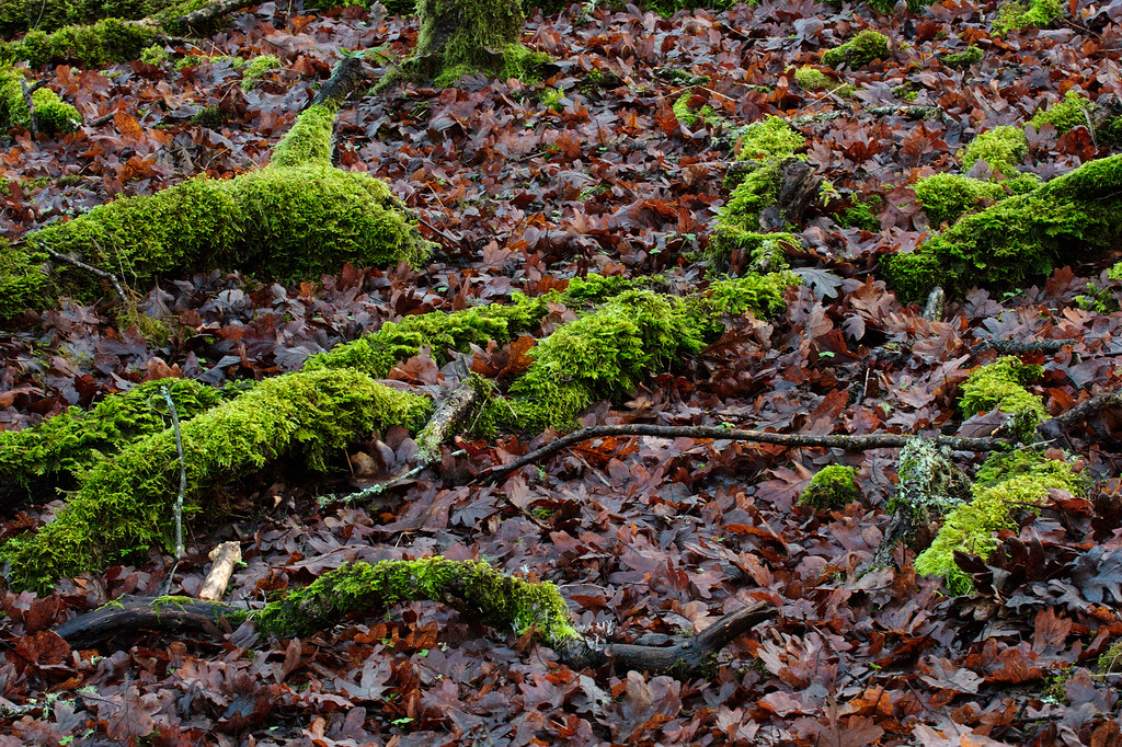Fallen tree branches covered in moss sit amongst wet leaves on the forest floor