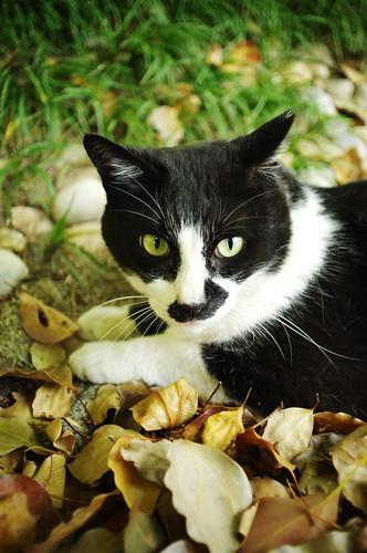 a mascot cat