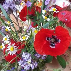 Heute:Sommerblumen frisch vom Feld :) #pois #fluxus #sommer