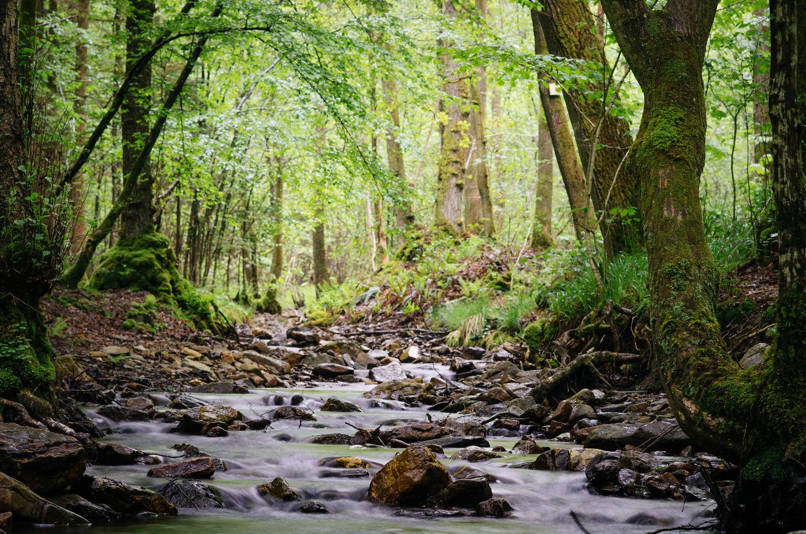 Balade dans les Ardennes - Comme un air d'Irlande