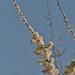 Para un buen día con flores....!! by Mikel Huici - Nature & Scenes PHOTOGRAPHY