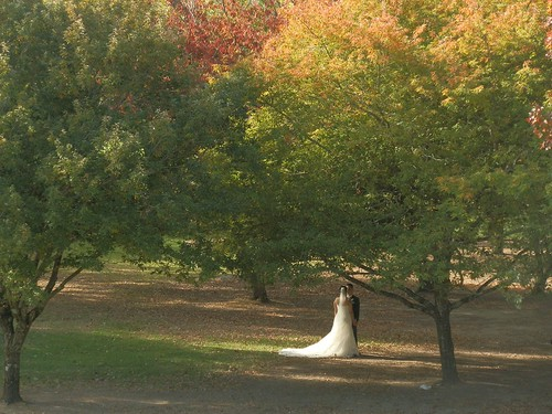 A Wedding at Mt Lofty Botanic Gardens