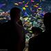 Kaleidoscope world by puthoOr photOgraphy