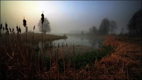 morning trees mist lake fog canon landscape mirror scenery springtime drohiczyn cesarz marcelxyz