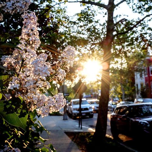 street flowers sunset sun sol us dc washington spring districtofcolumbia fuji dof unitedstates sidewalk flare dcist fujifilm shaw x100s