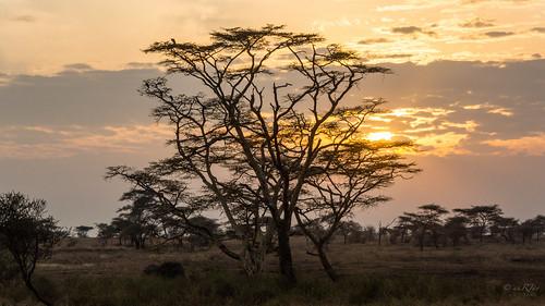 sunrise landscape tanzania mara serengeti raghujana aarjayphotography