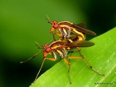 Diptera of Ecuador