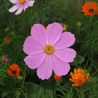 Colorful flower (AP4M1643 1PS)
