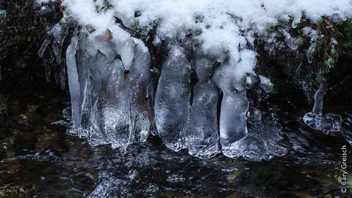 Stalactites de glace dans la très jeune Sûre, près de Vaux-sur-Sûre (2015-02-07 -16)