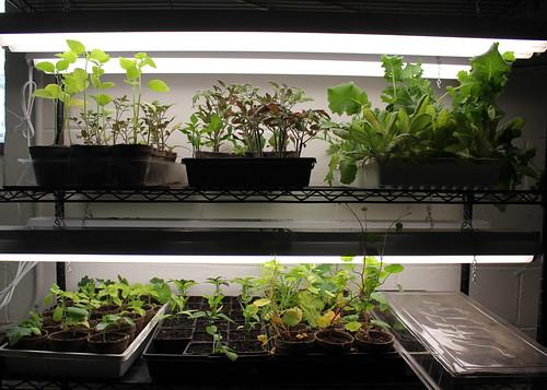 20150405. Seeding growing setup.