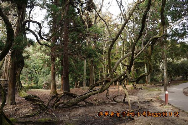 日本奈良公園東大寺19