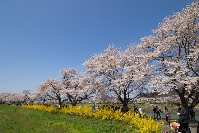 Hitome sembon zakura (thousands SAKURA at a glance) 2