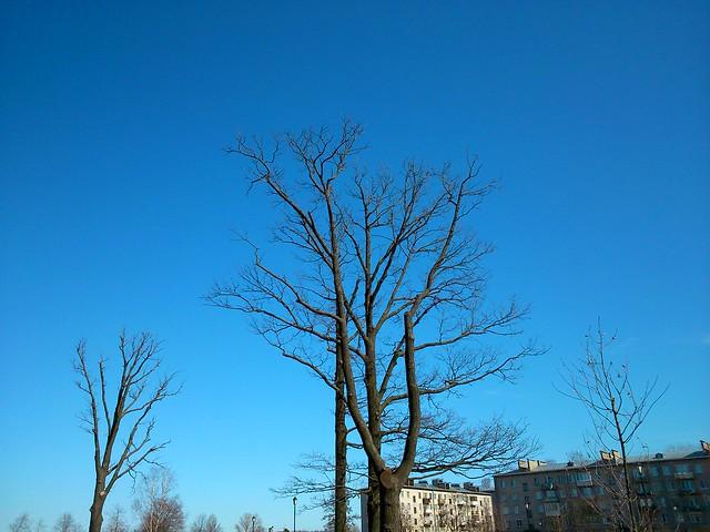Ветви деревьев // Tree branches