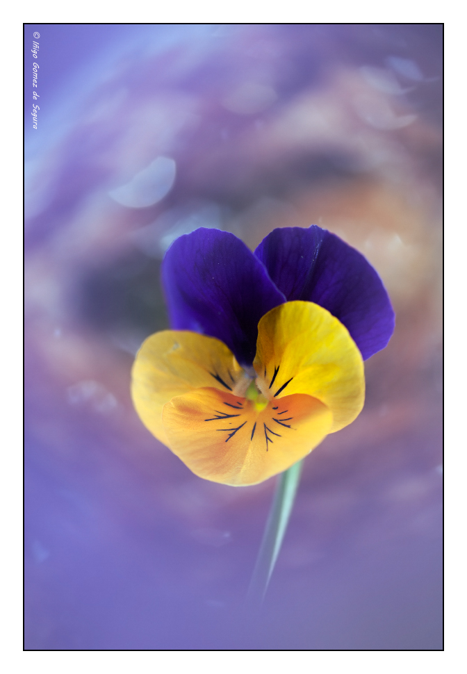 "6.- Fauna o flora: Abr ""Primor onírico"""