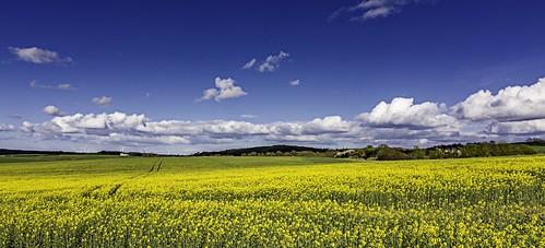 county sunshine landscape durham countydurham d7100 landoftheprincebishops