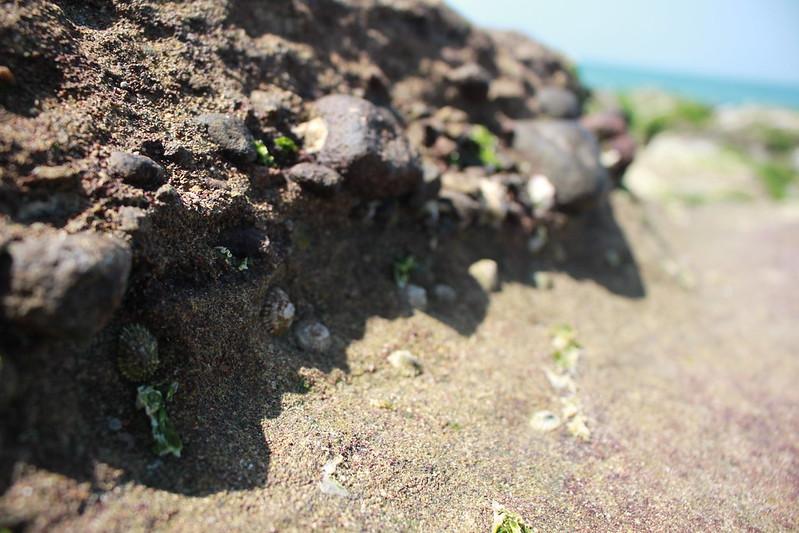 17度C台二線景點-石門-老梅綠石槽 (39)