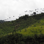 Do, 14.05.15 - 10:34 - Valle de Cocora (Wachspalmen)