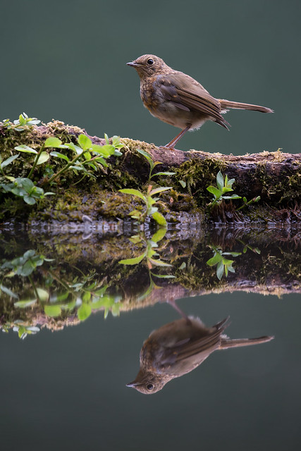 On Reflection......... It's that Robin again!!