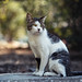 Street cat 165 by Yalitas