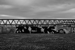 daisies, OBK and a bridge