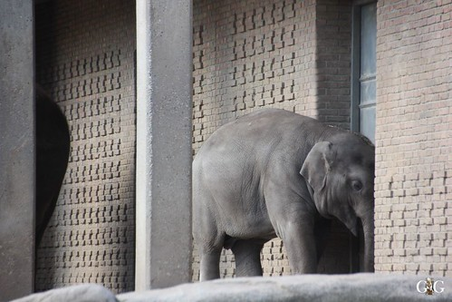Oster-Montag im Zoo Berlin 06.04.20153