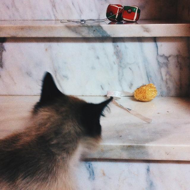 Kitty de rua que adora companhia e invadir casas