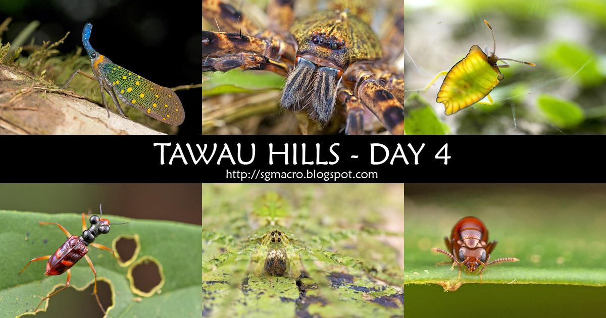 Tawau Hills Day 4