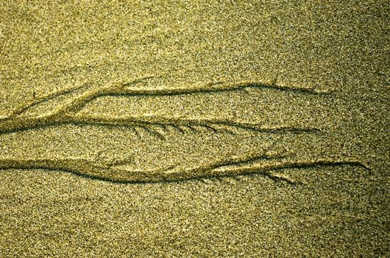 Sandy tracks2, Cooks Beach Corro Penn 22 4 15 K55154