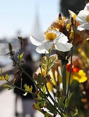 Flowers at the Beach